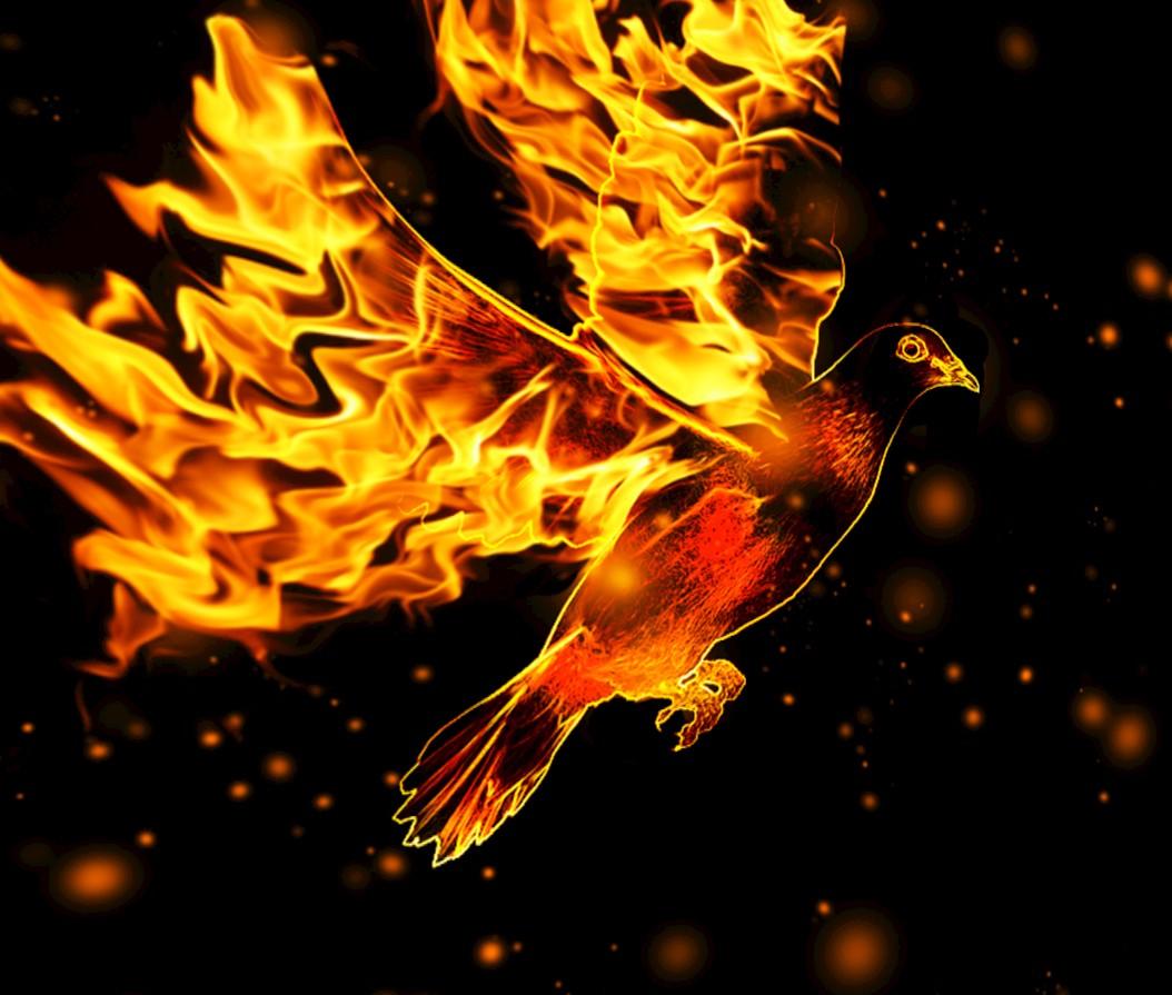 HS & Fire